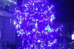2016_albero-scuola-notte