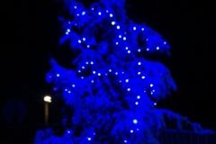 albero_avap_notte