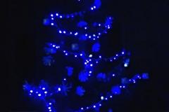 albero_bpm_notte
