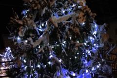 albero_catechismo_notte