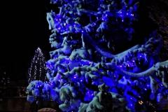 albero_mamme_notte