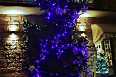 albero_morena_notte