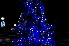 albero_proloco_notte