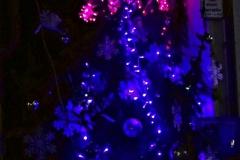 albero_rondine_notte